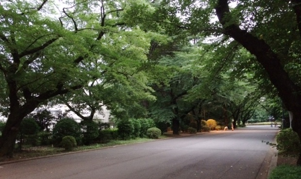 校舎が点在する、ICUキャンパスの入り口道路。