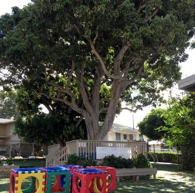 とくに、園庭にあるシンボルツリー下のテラスにあった、大きなブロックが印象的。