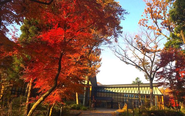 秋が深まる、ICUのキャンパス。