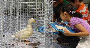 井の頭公園の「みんなでつくるおもしろ動物図鑑コース」。じっくり動物観察します(写真は「東京ズーネット」より)。